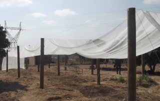 Netting Placed Before Tensioning