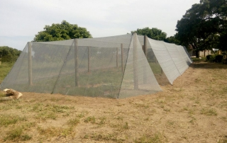 Completed netted vegetable garden