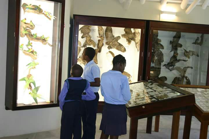 Students Studying Exhibits At Graeme Naylor Museam