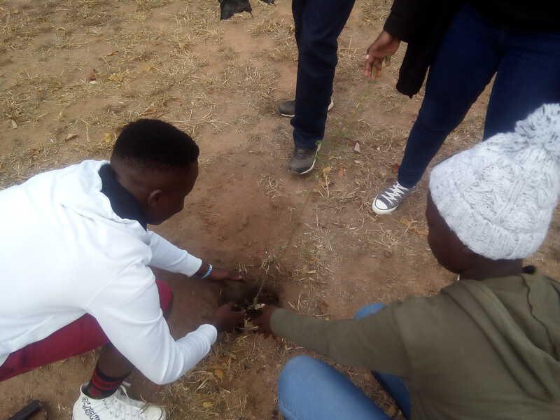 Students planting a tree sapling at the Timbavati Foundation