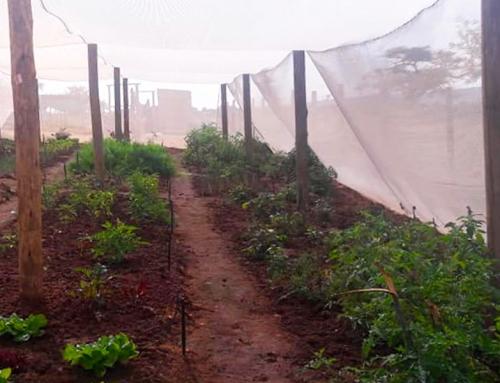 2019 Netted Vegetable Gardens Summary